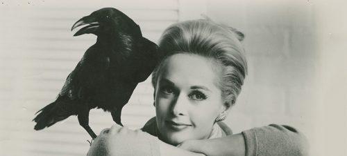 PR-bilde til The Birds
